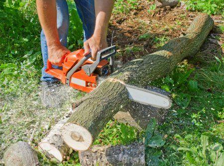 Пиляю дерева та дрова