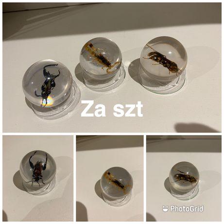 Insekty ozdoba osa skorpion żuk