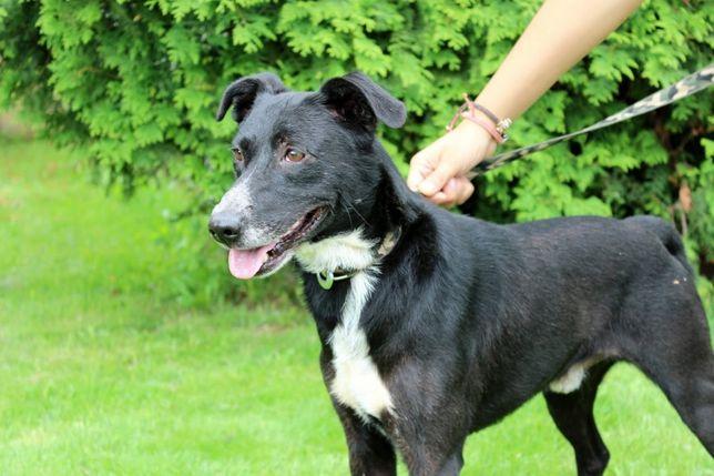 Leny - miły i pozytywny pies; uwielbia spacery z dorosłymi i dziećmi