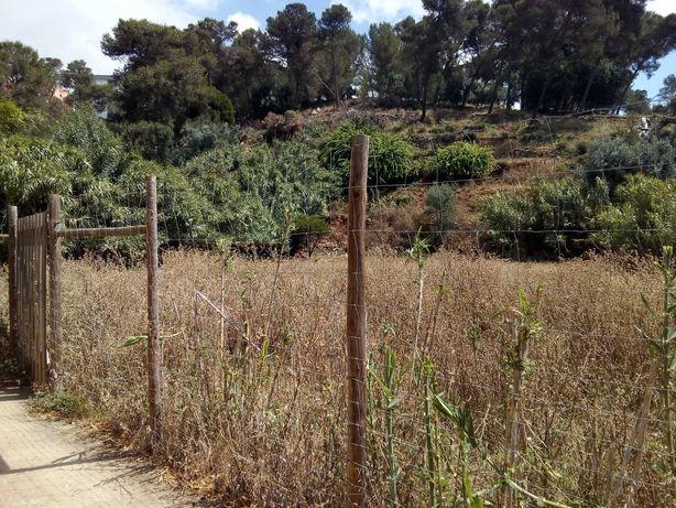Limpezas de terrenos. Se vedados, vegetação controlada a baixo custo.