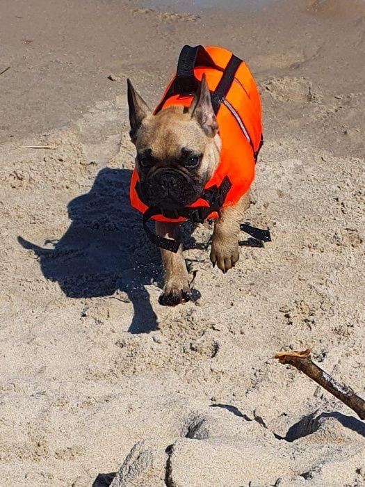 Kapok dla psa Otwock - image 1