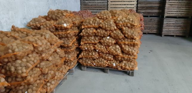 Ziemniaki Bellarosa, Vineta