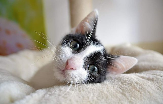 Kotek Jasiu do adopcji