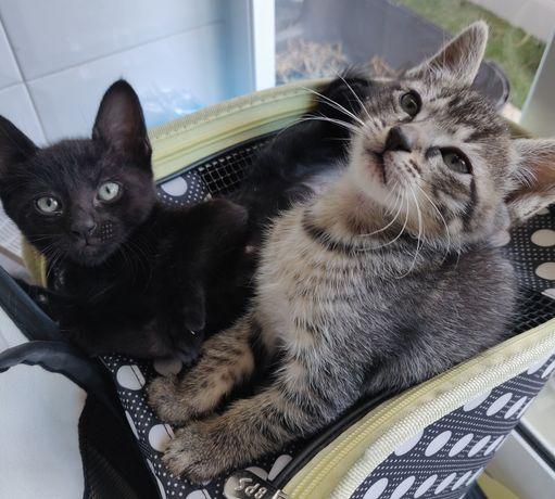 Hansel & Gretel adoção conjunta