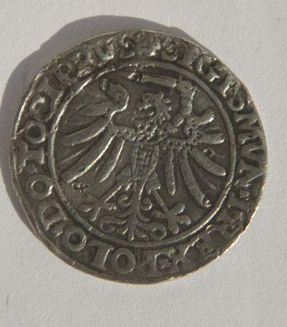 Szóstak elbląski, 1536r