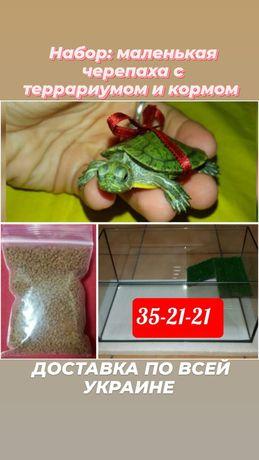 Богатый подарок : маленькая черепаха с террариумом и кормом