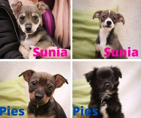 Psia rodzinka - 4 szczeniaków szuka kochających domów!
