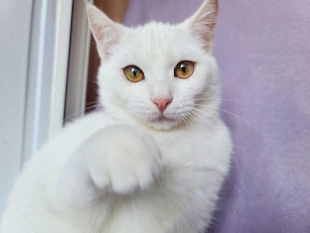 Маленьке білосніжне кошенятко Сніжана 3 місяці киця кішка Терміново!