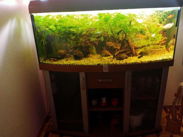 Akwarium z całym wyposażeniem i lokatorami :)