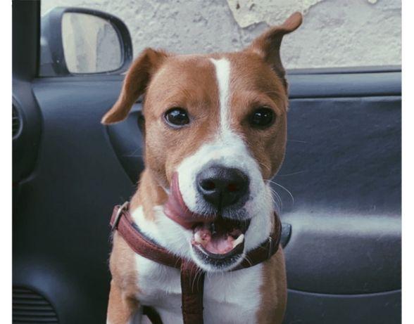 Cão para adoção