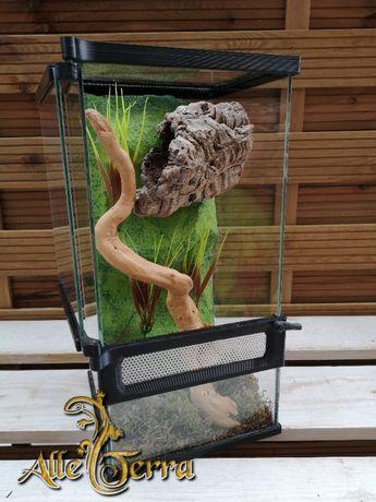 Terrarium szklane o leśnym wystroju 20x20x40 cm. AlleTerra