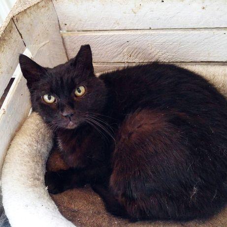 Margo bardzo pilnie potrzebuje domu! Czarna kotka
