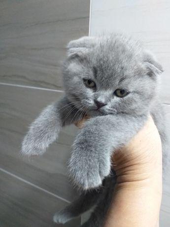 Красивенные котята