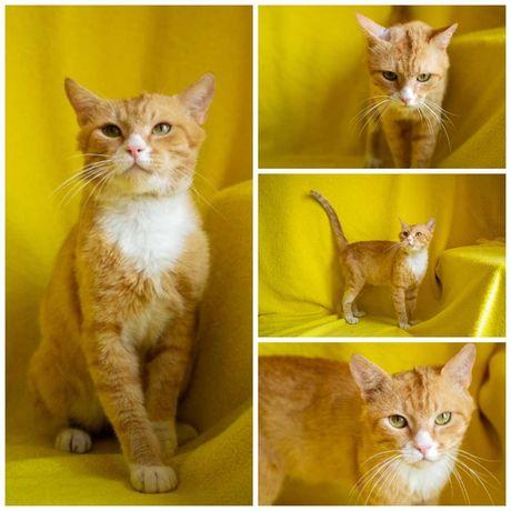 Фунтик, уютный солнечный котик, кот, 1,5 года, кастрирован