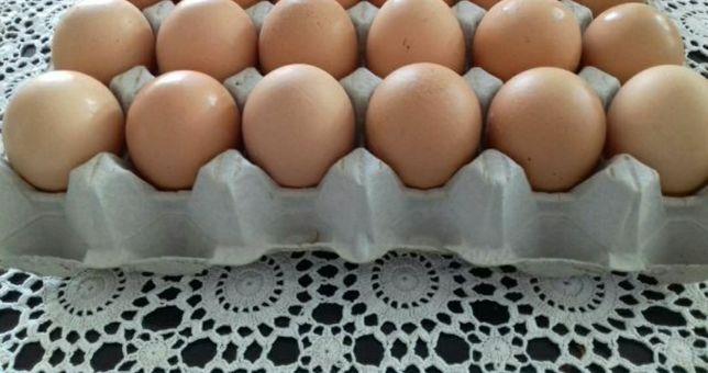 JAJA WIEJSKIE jajka ekologiczne