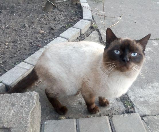 zaginął kot syjamski , okolice Leśnej, Sowlańskiej, Naftowej Białystok