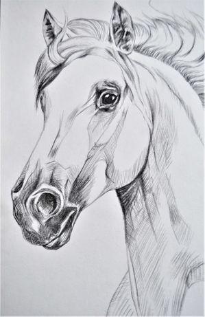 Rysunek, szkic, koń, na zamówienie