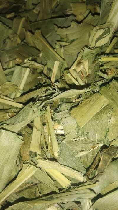 Kukurydza suszona młoda 1kg  ziele kukurydzy