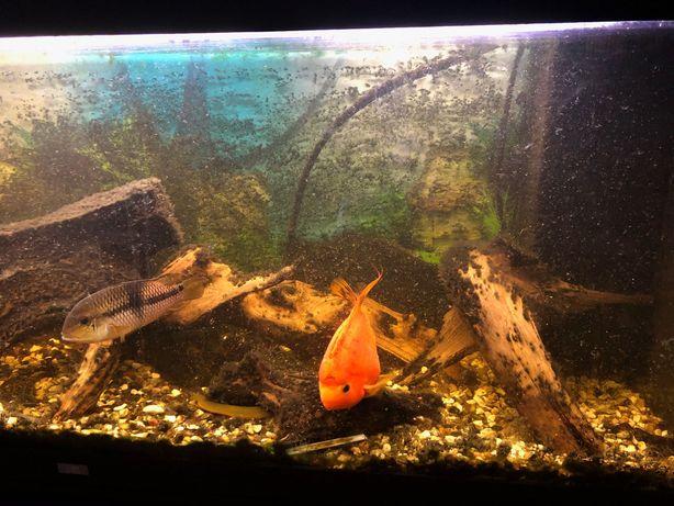 Akwarium Juwel Rio 450