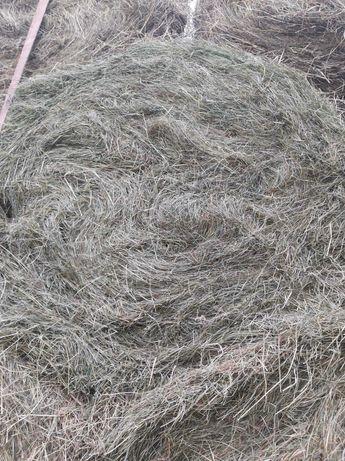 Sprzedam siano z łąk gruntowych ze stodoły cena z transportem do klien