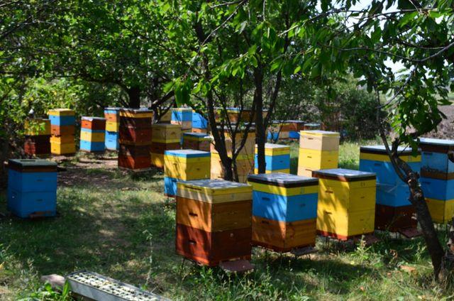 Продам пчел, пчелопакеты, ульи.
