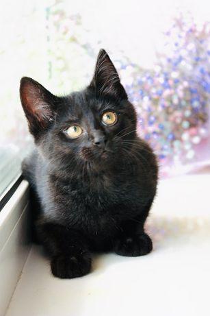 Черный котенок в поиске дома