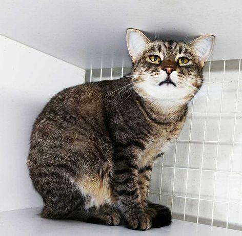 Мальчуган Чешир, 1 годик, ищет семью, в добрые руки, кот, котик