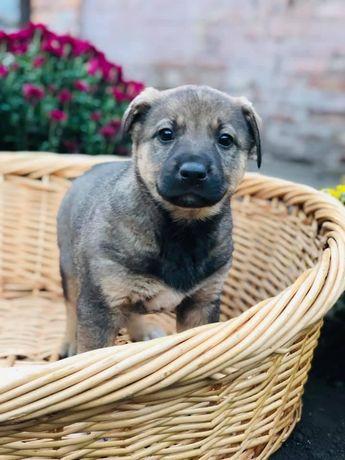 Красивый щенок Чип мальчик