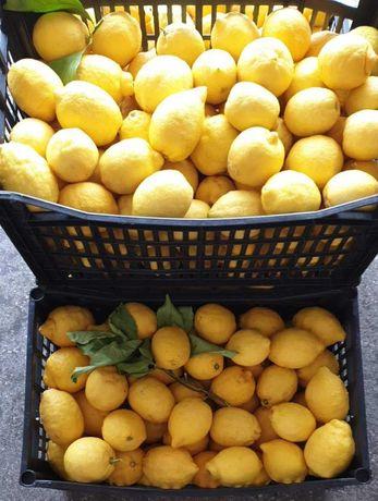 Cytryny niewoskowane