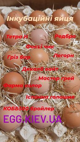 Інкубаційні яйця
