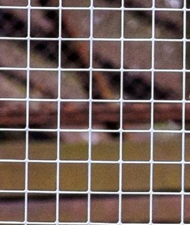 Siatka hodowlana zgrzewana na woliery, ogrodzenia, ocynk 13x13/0,8