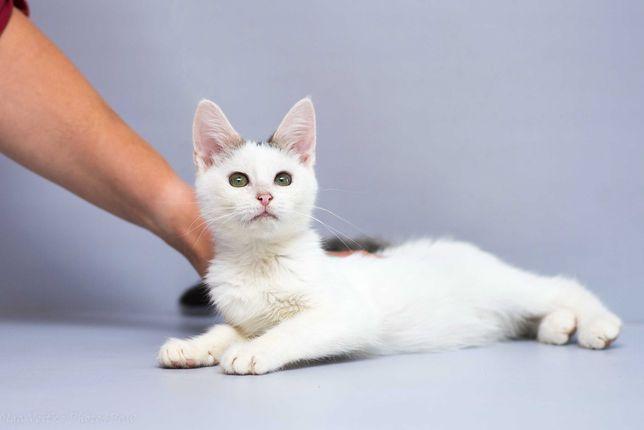 Отдам в хорошие руки слепого котенка подростка Глазурика.