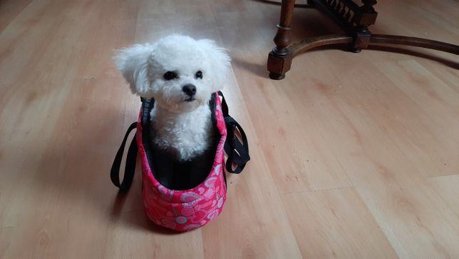 torba dla psa oraz ciuszki