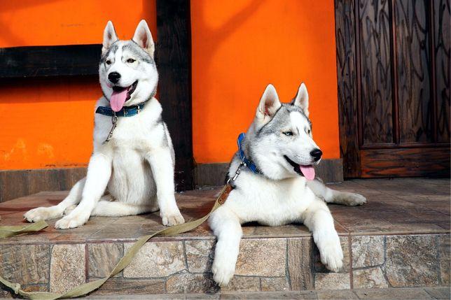 Два эффектных щенка!