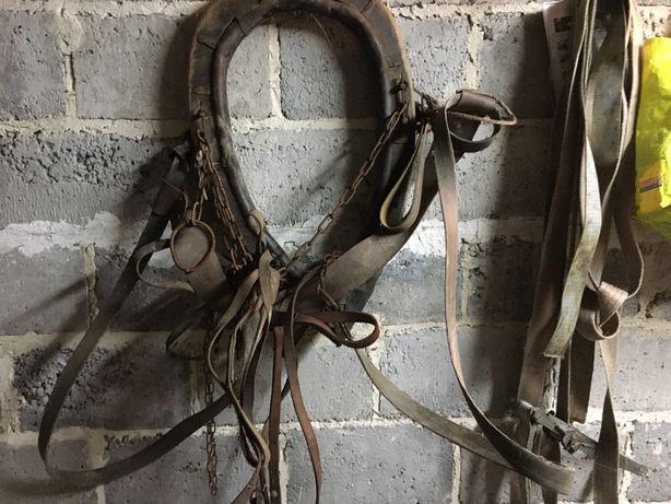 Uprząż stara dla konia do wozu homonto