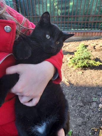 2,5 miesięczny kotek
