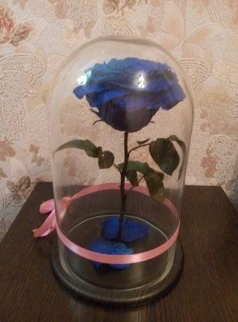 Новая живая роза в колбе