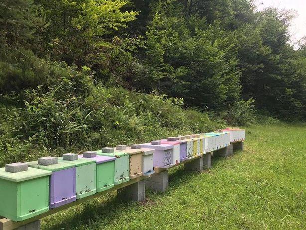 Пчелиные матки Карпатки Продажа Пчелиные матки Занимаемся выводом