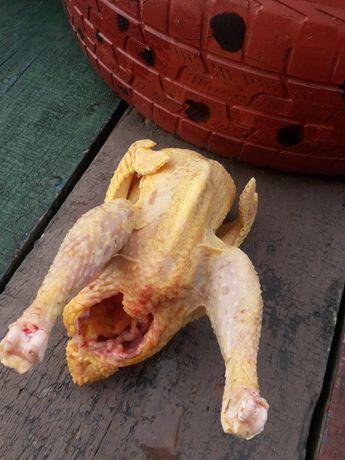 Tuszki kurczaka waga ok 1.5kg