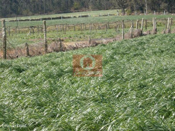 Terreno Agrícola c/ 2805m2 em Rates, Povoa de Varzim