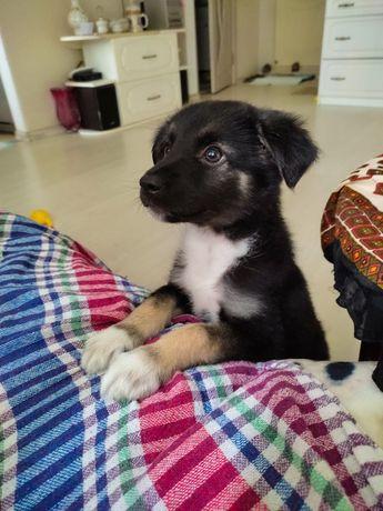 Сладкая и нежная булочка Лулу в поисках семьи - щенок в любящие руки