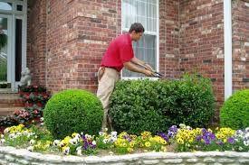 Услуги садовника. Обрезка хвойных и плодовых