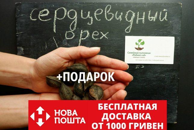 Орех сердцевидный 10 шт семена (насіння горіх для саджанців)на саженцы