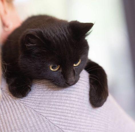 Балу кот 8 месяцев, котик, кошеня, кіт