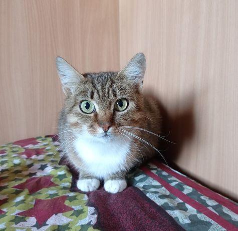 Мурочка полосаточка 1 год, отдам кошку