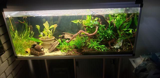 Sprzedam korzenie do akwarium