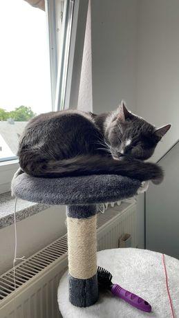 Pet Sitting - Home Sitting - Ao domicílio - cuidador/tratador