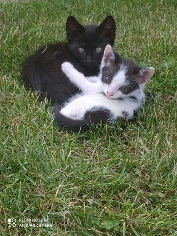 Oddam pięć uroczych kotków.