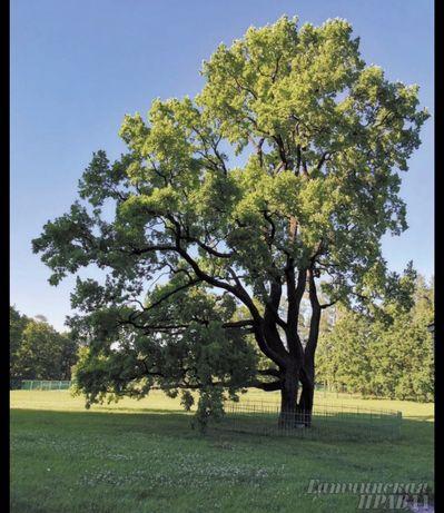 Спил деревьев покос травы