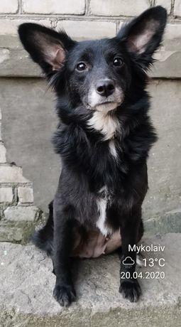 Ксолоитцкуинтле, ксоло, мексиканская голая собака, щенки.